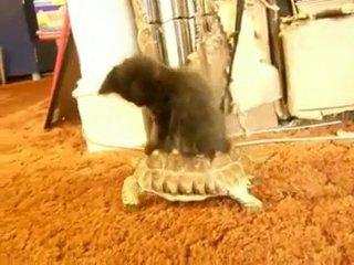 Приколы с кошками :)